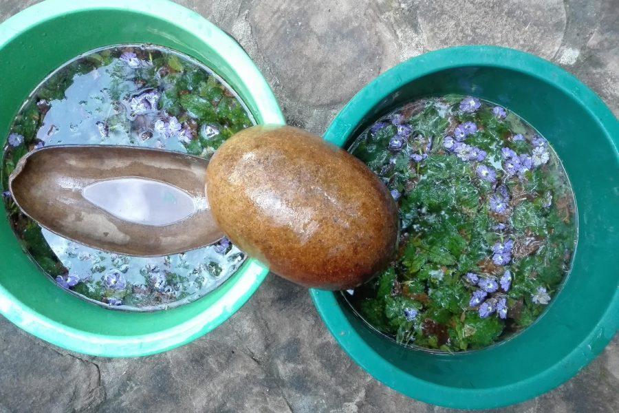 baño de limpieza con plantas amazonicas